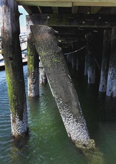 Pilings are in disrepair at Shipyard Quarters Marina.
